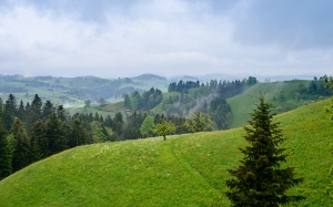 summer, june, landscape, switzerland, nature, trees, woods, hills