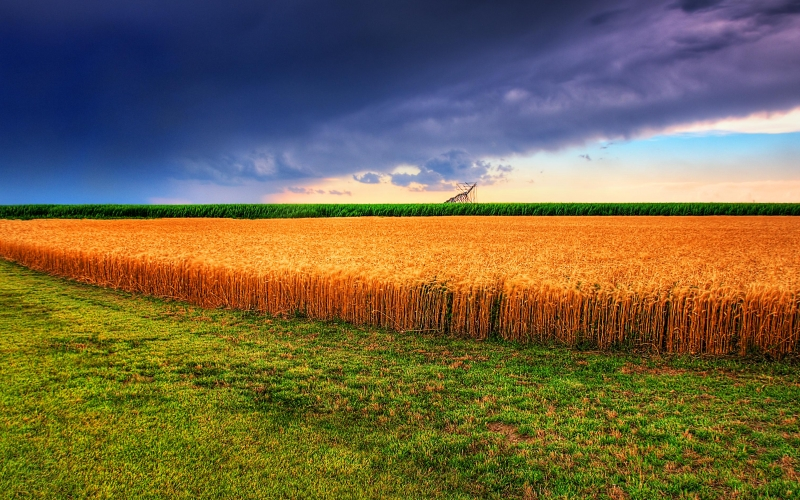 field, summer, landscape, nature, panorama, clouds