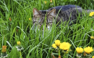 cat, grass, kitten, animal, pet, mieze, flowers, nature