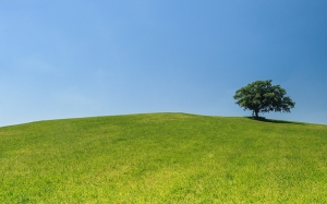 hill, meadow, tree, green, blue, sky, nature, grass, serenity