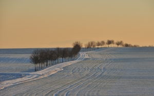 winter, landscape, trees, snow, sunset, field, meadow