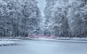 bridge, calm, cold, fog, freezing, frosty, frozen, ice, nature, snow, trees, winter, woods, park
