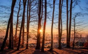 forest, landscape, sunset, trees, nature, wood, winter, light