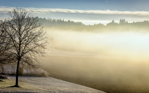 winter, morning, fog, trees, forest, nature, landscape, wood