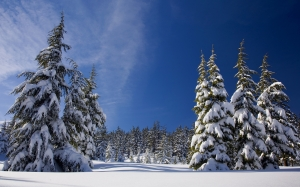 snow, forest, winter, nature, trees, pine, landscape, winter wonderland, frost, blue sky