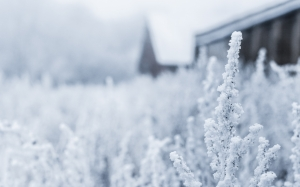 winter, nature, snow, frost, cold