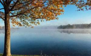 autumn, tree, daytime, fall, forest, idyllic, lake, landscape, leaves, morning, nature, nobody, outdoors, reflection, scenic, sky, water