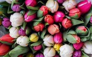 tulips, flowers, spring, textures, bouquet
