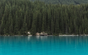 Moraine Lake, Canada, conifer, evergreen, forest, green, blue, idyllic, lake, landscape, mountain, pine, river, scenic, summer