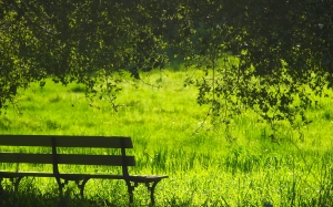 bench, park, field, meadow, summer, spring, nature, outdoors, country, rural, trees, pastoral