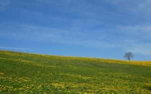 spring, summer, meadow, flowers, tree, nature, landscape, harmony, blue sky