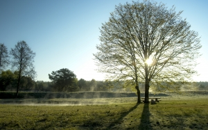 early spring, spring, morning, landscape, fog, sunrise, tree, nature, sun, meadow, sky, rays, grass, dawn