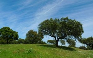 trees, green, spring, nature, environment, sky, landscape, ecology, meadow, grass