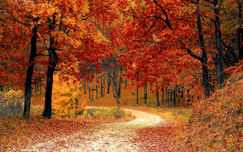 fall, autumn, season, woods, nature, leaves, trees, colorful, october, forest, nature, landscape