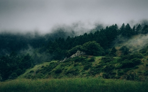 clouds, cloudy, foggy, forest, grass, landscape, meadow, nature, trees, mountain