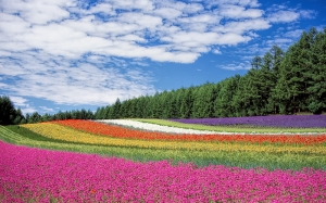 flower garden, blue sky, bloom, blossom, colorful, colourful, flora, flowers, nature, trees