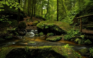 landscape, forest, spring, morning, nature, woods, creek