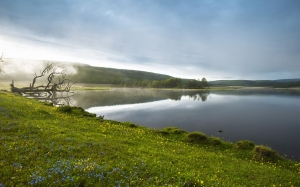 lakeside, morning haze, flowers, spring, nature, lake, fog