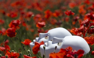 field, flower field, flowers, masks, nature, poppies, poppy, red, spring, wild flowers