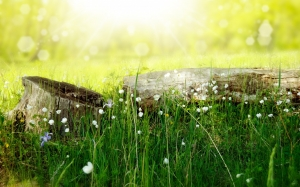 meadow, wood, forest, sun, summer, picnic, light, rays, nature, grass, flowers