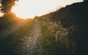sunset, nature, road, landscape, grass