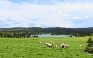 may, lamb, summer, mountain, fells, himmel, landscapes, bait, flock, wool, nature, sheeps
