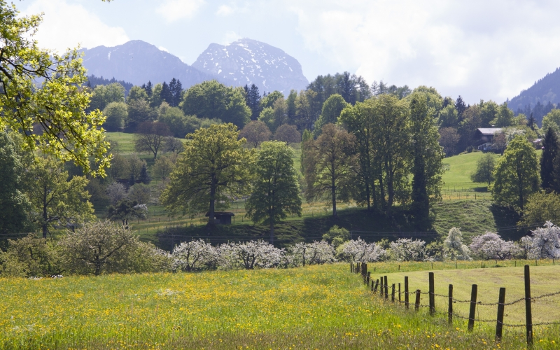spring, sunshine, may, mountains, wendelstein, trees, water, nature, landscape, pasture fence, grass