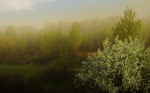 fog, nature, morning, dawn, landscape, apple, forest, spring, may, freshness, background