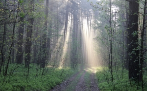 forest, may, light, spring, green, nature, evening, trees, wild, sunny, sun rays, woods