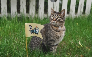 cat, pet, flag, animals, grass