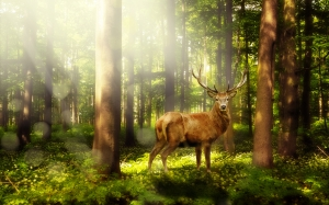 magic forest, atmosphere, mystical, fairytale, landscape, forest, deer