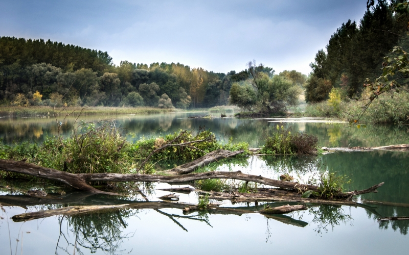 river, danube, fog, reflection, nature, trees, water, landscape, luhy, river basin, autumn, floodplain forest, october
