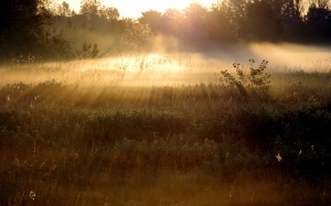 fog, sunrise, rays, forest, meadow, scrubs, light, morning, summer, dawn, landscape, nature
