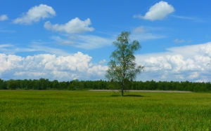 tree, landscape, meadow, sky, clouds, forest, nature, grass