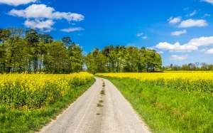 spring, landscape, oilseed rape, clouds, trees, lane, away, trail, nature, grasses, hiking, yellow, field