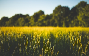 field, grass, green, macro, nature, trees, landscape, summer