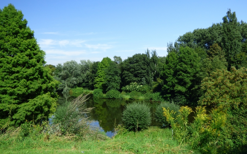 lake, pond, green, water, nature, rest, landscape, trees, spring, summer, waters