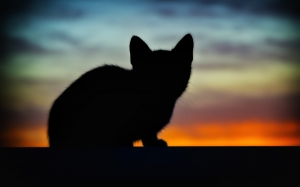 animal, backlight, cat, dawn, dusk, evening, kitten, light, pet, sunset