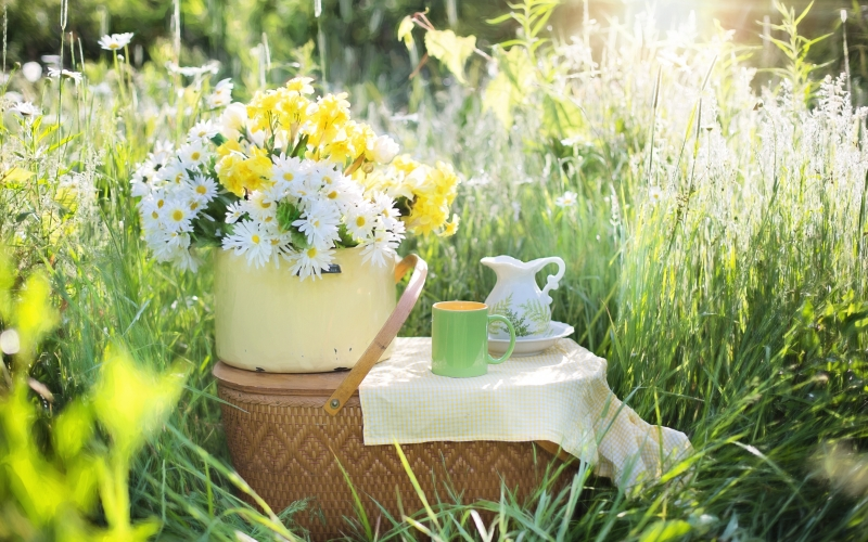 daisies, summer, flowers, nature, green, bloom, tea, coffee, morning, picnic, field, grass