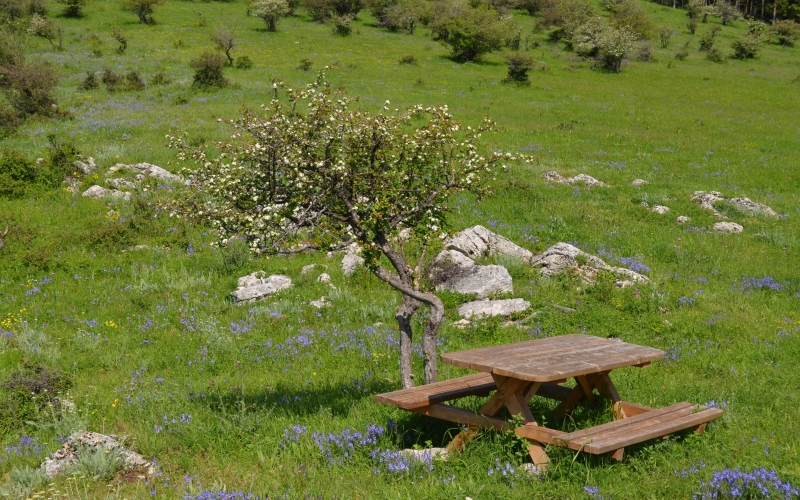 natural park, meadow, bench, picnic spot, green, flowers, spring, nature