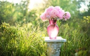peonies, flowers, bouquet, vase, pink, field, meadow, blossoms, spring, summer, romance, blooms, garden, grass
