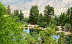 mountain lake, summer, forest, nature, camping, summer camp, san bernardino, national park, california, jenks lake, picnic, pine trees, landscape