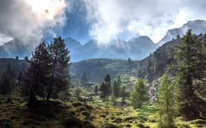 forest, mountain, panorama, landscape, nature, sky, clouds, fog, valley, beech, trees, summer, grass