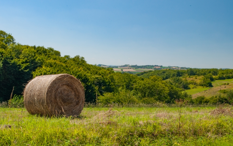 summer, harvest, field, nature, stubble, straw bales, agriculture, sky, blue, clouds, roll, france, grass, bushes, shrub, meadow