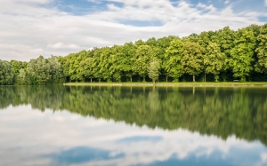 forest, mirroring, trees, lake, water, silent, nature, reflection, summer, woods, park, landscape