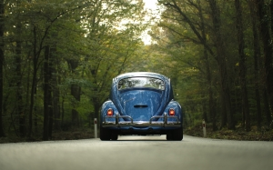 woods, blue, car, classic car, forest, outdoors, road, travel, trees, vehicle, vintage, volkswagen, volkswagen beetle, back