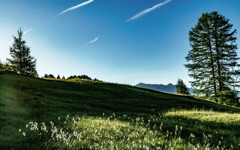 blue sky, conifers, countryside, daylight, field, grass, grassland, hill, landscape, meadow, nature, outdoors, trees