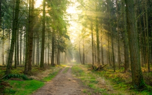 forest, sun, green, spring, summer, fresh, nature, landscape, sunlight, trees, light, scenic, wood, outdoor, morning, path,