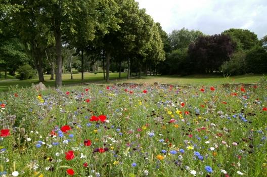 flowers, grass, landscape, lawn, nature, outdoors, park, trees, vibrant, woods