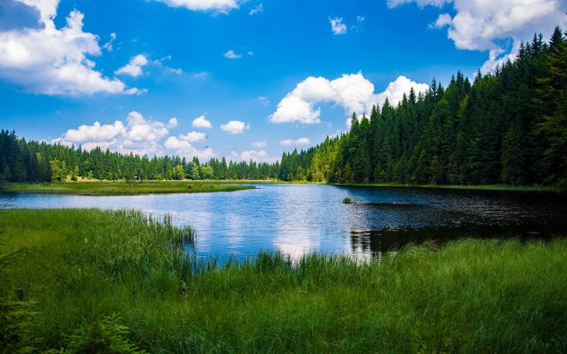 forest, grass, lake, nature, outdoors, placid, river, scenic, trees, water, landscape, sky, woods, blue, green